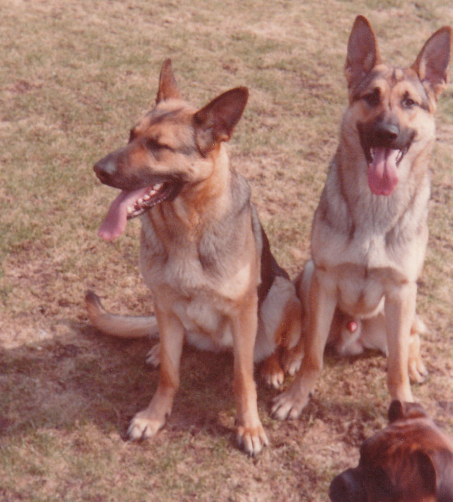 Sacha og Akela