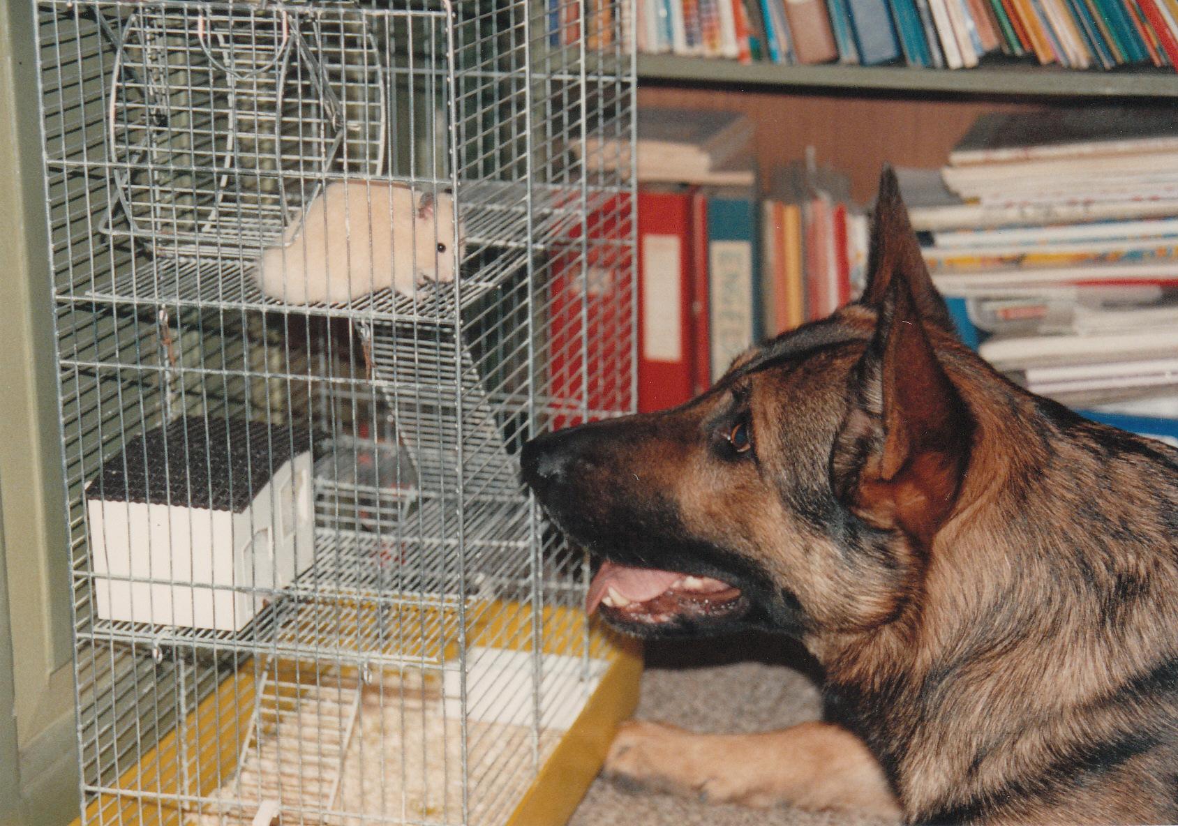 Hamster kik.