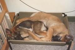 Kitta og Kendo