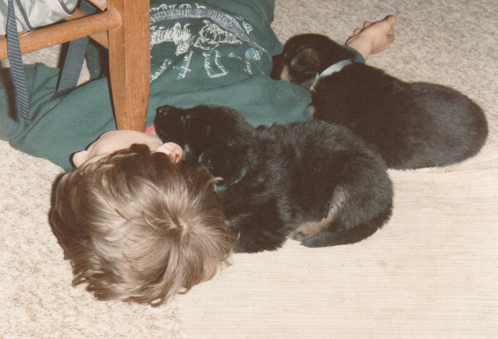 Tre sovende hvalpe