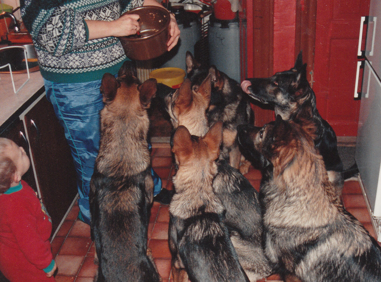 Seks hunde