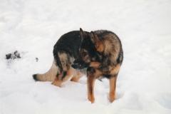 Fenner i sneen