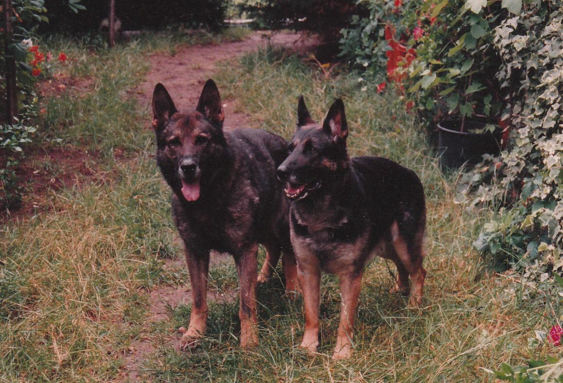 Ferro og Tanya