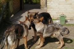 Finni, Kendo og Xanthos
