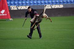 Prøvehund VM 2018