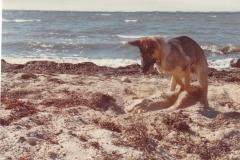 Sacha på stranden
