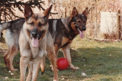 Sacha og Fenner